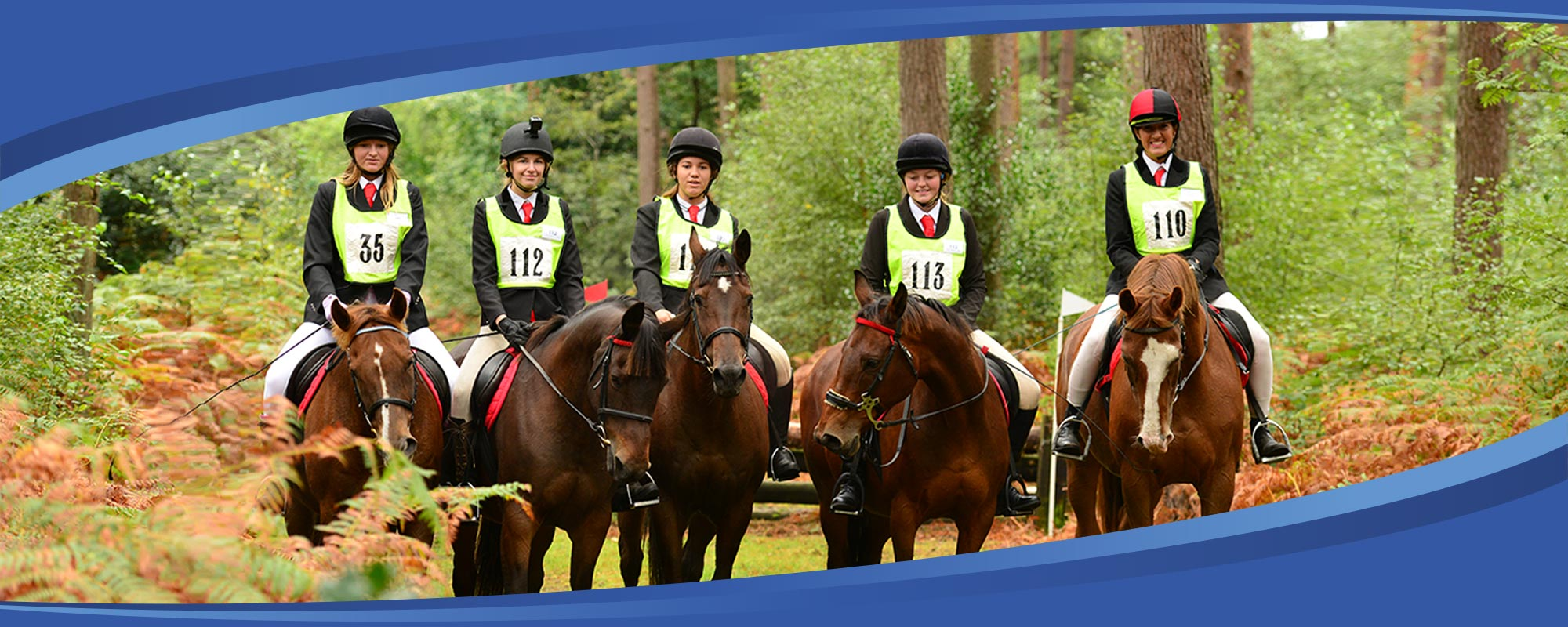 Frensham Horses